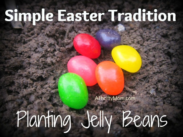 easter tradition, planitng jelly beans