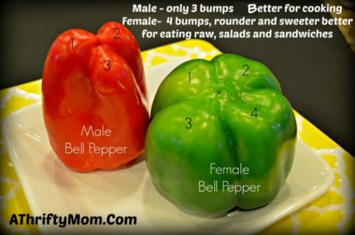 How to tell a female or Male bell pepper
