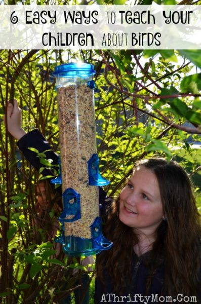 6 Easy Ways To Teach Your Children About Birds, Bird feeders at ACE Hardware, Fiary Garden Ideas , where to buy birdfeeders, how to make bird feeders with your family, family activities to do outside, ad