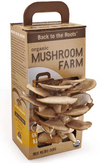Grow your own Mushroom Oyster Mushroom kit